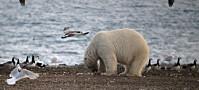 Sju ting å få med seg om klimaendringer i nord