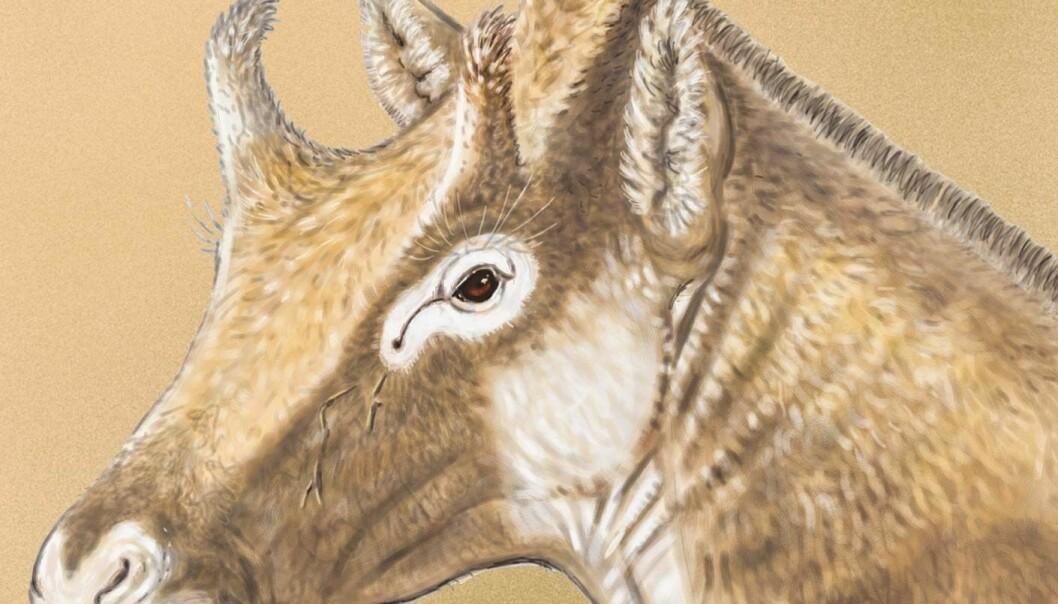 """X. amidalae slik en kunstner ser for seg at den så ut. Legg merke til den rare horn-""""hatten"""" på toppen av hodet. (Bilde: Israel M. Sánchez)"""
