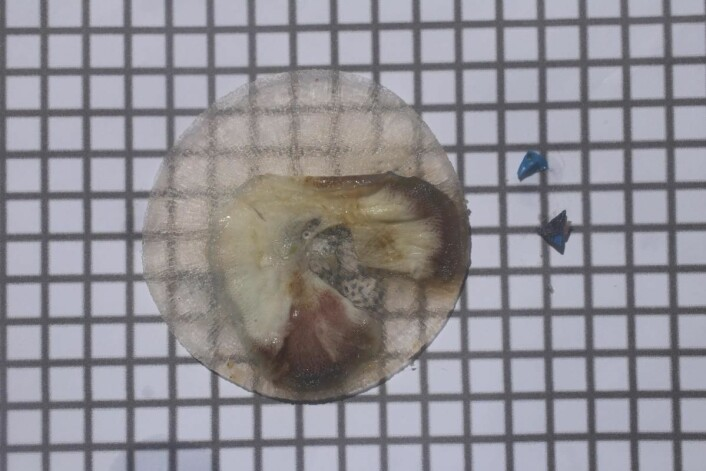 "Ekspedisjonen samler stadig mikroplast i den såkalte ""Manta-trawlen"".  (Foto: Håkon Wium Lie, Kon-Tiki 2)"