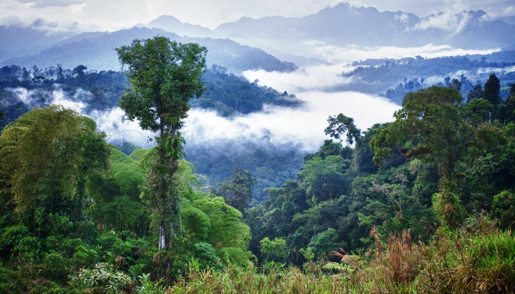Redder vi regnskogen av hensyn til regnskogen i seg selv eller av hensyn til klimaet? (Foto: Shutterstock)