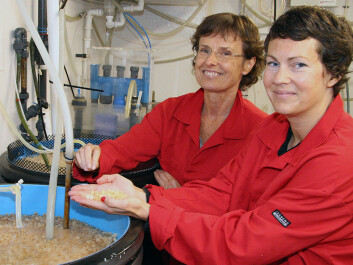 Elin Kjørsvik (left), academic leader for NTNU's Centre of Fisheries and Aquaculture, and Kari Attramadal, a postdoc at the Department of Biology. )Photo: Idun Haugan)
