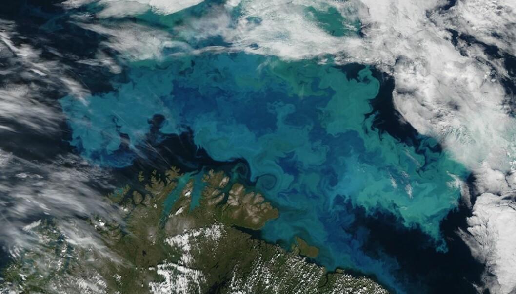 Den grønnblå massen er enorm bestand av planktonarten coccolithophorer i Barentshavet.  (Foto: NASA Earth Observatory/Wikimedia commons.)