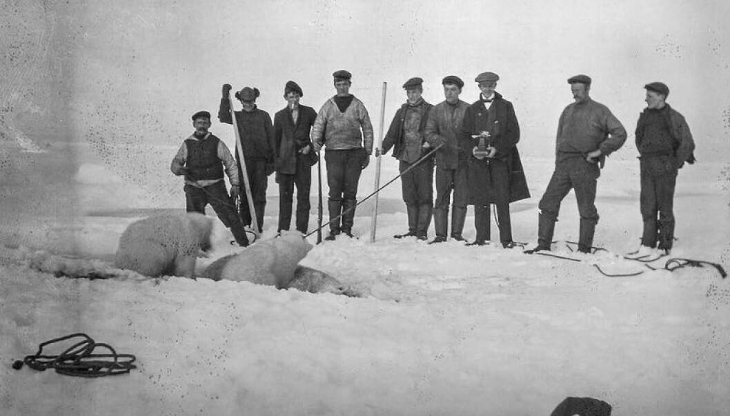 Den norske polarhistorien handler også om erobring av nye områder og isbjørnjakt. Troféjakt i Arktis var et fenomen allerede tidlig på 1800-tallet. (Foto: Giæver/Perspektivet Museum)