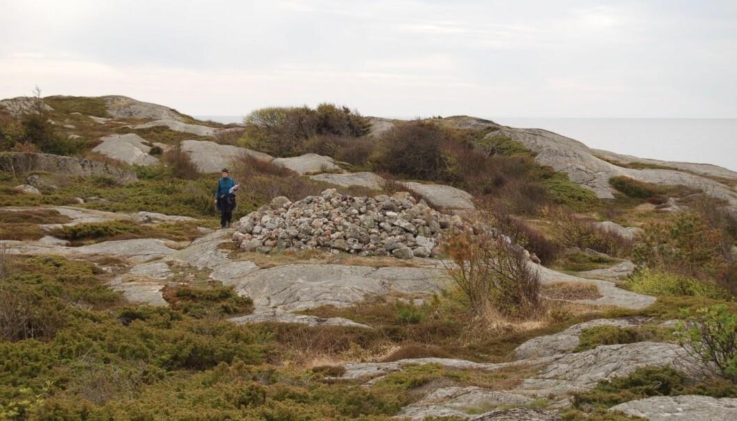 Åsrøys fra bronsealderen i kystlandskapet på Brunlanes ved Larvik i Vestfold. Røysa er bygget av relativt store stein og inneholder ingen eller lite jord. Åsrøysenes beliggenhet i landskapet viser at de henvendte seg mot folk som nærmet seg fra sjøen. (Foto: NIKU)