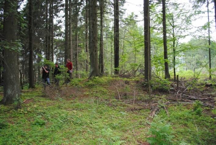 Typisk eksempel på jordbygget gravhaug fra jernalderen i jordbrukslandskapet på grensen mellom skog og innmark. (Foto: NIKU)