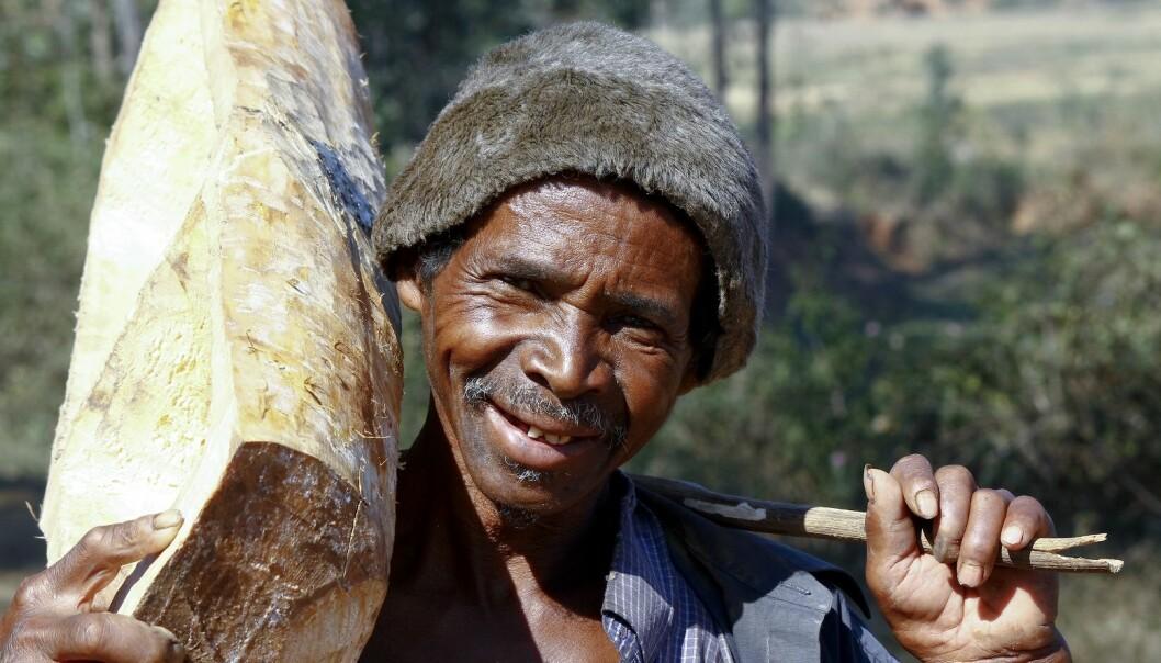 Inntekter fra skog utgjør i gjennomsnitt 21 prosent av husholdningenes inntektsgrunnlag i de 24 utviklingslandene som er undersøkt. (Illustrasjonsfoto: Shutterstock)