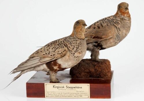 100 000 bird samples online