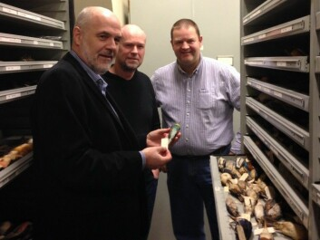 Jan T. Lifjeld, Arild Johnsen and Lars Erik Johannessen in NHM's collection of bird skins. Now they invite anyone to explore what can be found here. (Photo: Torstein Helleve, NHM)