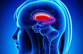 Gene variants for brain size discovered