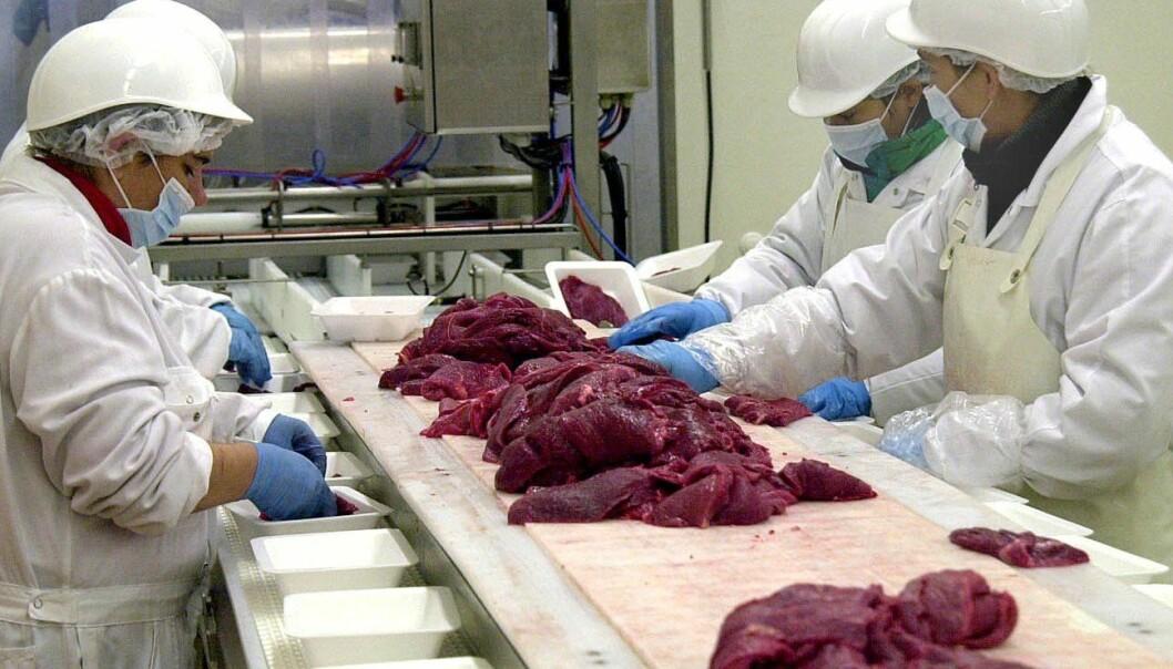 E. coli bacteria survive easily in food-production facilities.(Photo: Colourbox)
