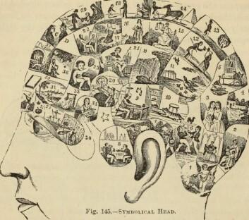 """Illustrasjon av hjernens inndeling ifølge frenologiske teorier. Bildet er fra den amerikanske boka New Physiognomy: or signs of character, as manifsested through temperament and external forms, and especially in """"the human face divine"""", publisert i 1889. (Foto: (Bilde: Internet Archive Book Images/Wikimedia Commons.))"""