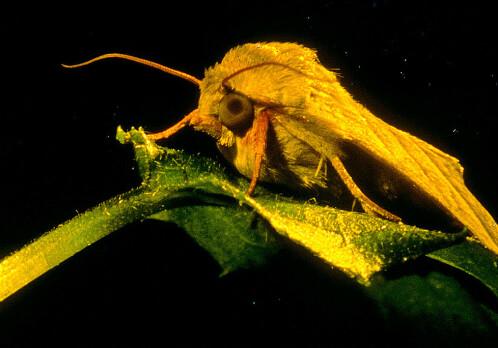 Moths get wind of partner from a kilometre away