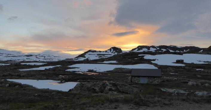 Ås- og fjelltopplandskap på Finse ved solnedgang. Foto: HAU