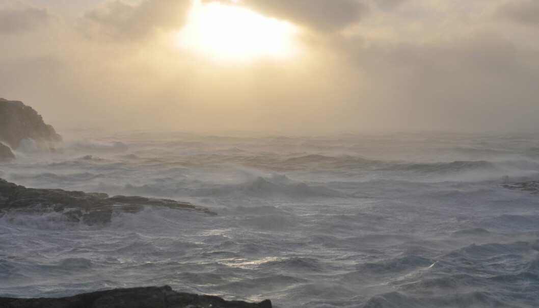Havvannet inneholder sopp.  (Illustrasjonsfoto: Shutterstock)