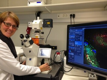 Camilla Raiborg is head of a research group at the CCB. (Photo: Terje Heiestad)
