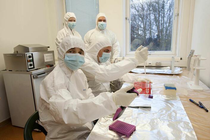 DNA-analyser av innsjøsedimenter. Fremst i bildet med munnbind: professor Inger Greve Alsos. (Foto: Mari Karlstad, Tromsø Museum – Universitetsmuseet)