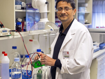 Learning more about the FSAP gene will be a long and difficult task, according to professor Sandip Kanse. (Photo: Grunnar F. Lothe)