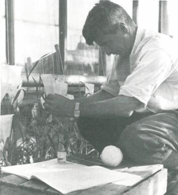 Markus Pestalozzi i arbeid på forsøksgården Vågønes. (Foto: Fra boka «Den grønne evolusjonen», Landbruksforlaget, 1989)