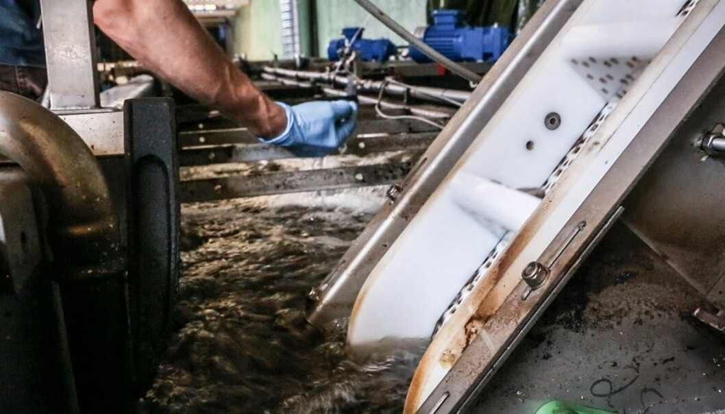 I disse bassengene i pilotanlegget på Hamar, gjør de forholdene optimale for mikroorganismer som tar opp fosfor fra kloakkvannet. (Foto: Chris Veløy, NRK)