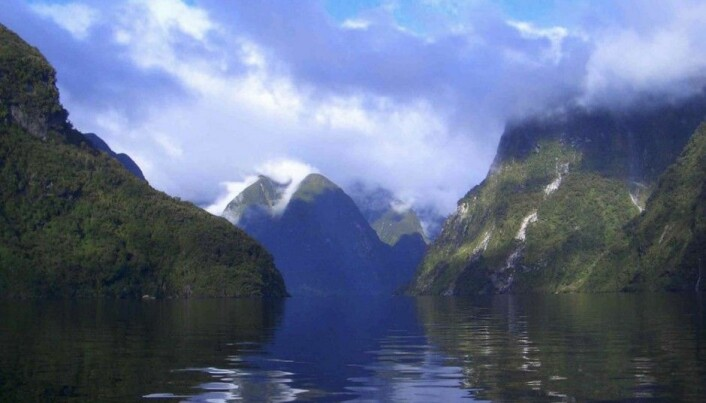Fjords catch loads of carbon