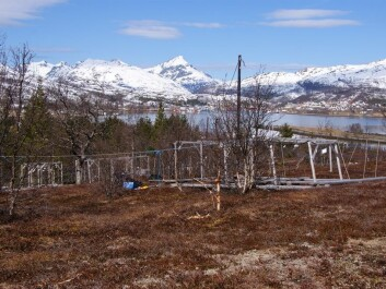 Field site shortly after snow melt in spring. (Photo: Jarle W. Bjerke, NINA)