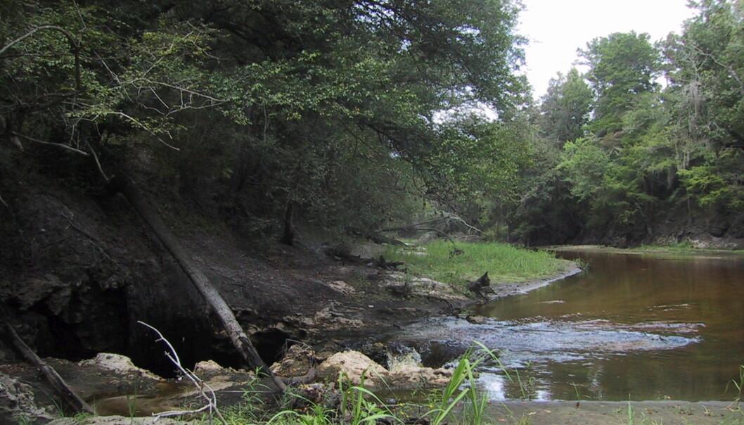 Elven Alapaha i Florida renner rett ned i undergrunnen. Elven forer grunnvannet i Florida. (Foto: USGS)