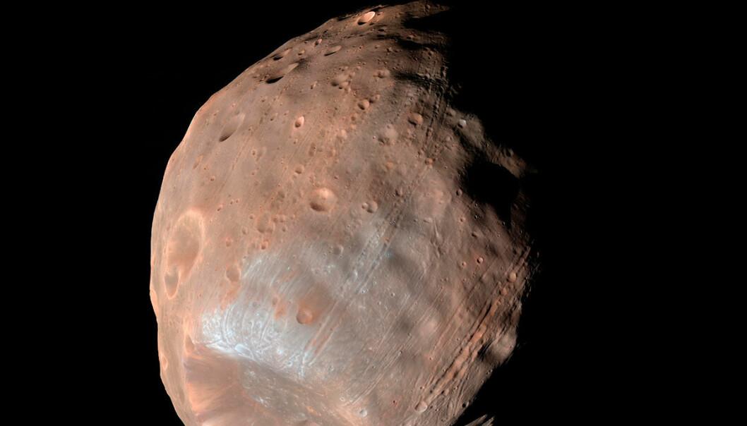 Marsmånen Phobos har strekkmerker fordi tyngdekreftene fra moderplaneten river og sliter i den lille kloden. Lenge trodde forskerne at stripene kom fra det voldsomme sammenstøtet som dannet kjempekrateret Stickney, som sees nederst i bildet. Stripene stråler imidlertid ikke ut fra dette krateret. Noen av stripene er yngre enn andre. Dette tyder på at prosessen fortsatt pågår. Bildet er tatt med den amerikanske marssonden Mars Reconnaissance Orbiter. (Foto: NASA/JPL-Caltech/University of Arizona)