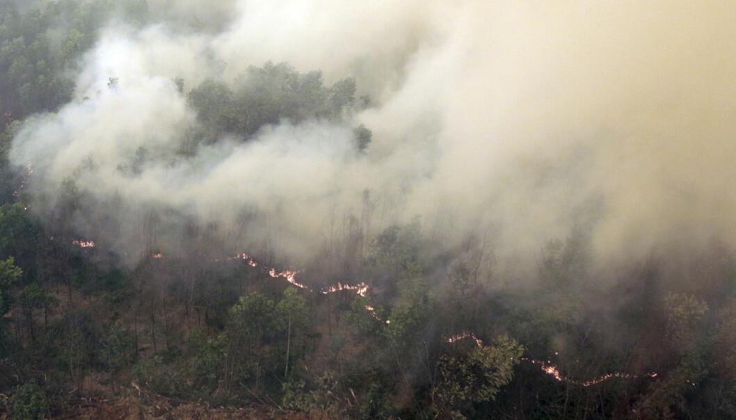 Tykk røyk stiger opp fra en av de utallige skogbrannene i Indonesia.  (Foto: Nova Wahyudi, Antara Foto, Reuters)