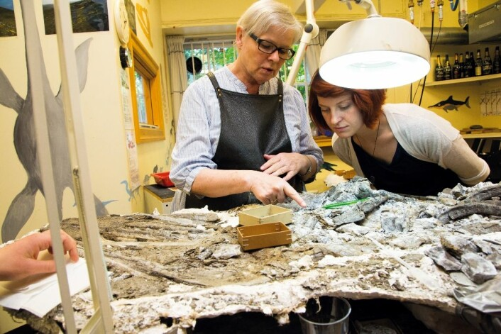 – Hvis øglen skal stilles ut, bruker jeg ett år på å preparere hodet, forklarer May-Liss Knudsen Funke (øverst til venstre) til masterstudent Victoria Engelschiøn Nash.  (Foto: Yngve Vogt)
