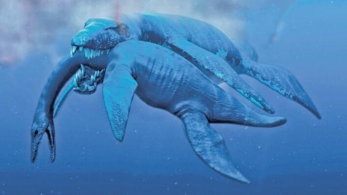 Øglejegerne har funnet mange rester av svaneøgler på Svalbard, både av plesiosaurier og av en kjempestor pliosaur på tretten meter. Illustrasjonen viser en 45 tonn tung pliosaur som angriper en plesiosaur.  (Foto: (Illustrasjon: Atlantic Production))