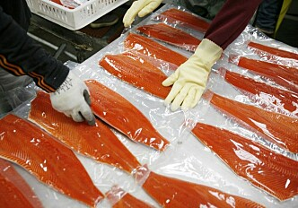 Chinese boycott of Norwegian salmon industry unsuccessful