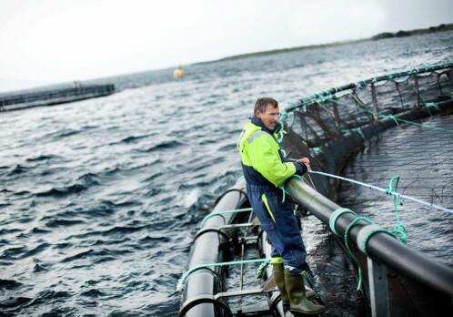 Salmon - Norway's most important livestock