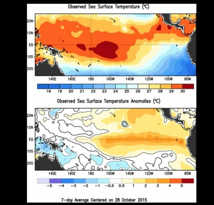 Temperaturen i havoverflaten (øverst), og avviket fra normalen (nederst). (Bilde: NOAA)