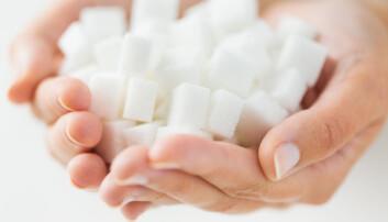Vanlig sukker består av en kombinasjon av like mengder fruktose og glukose. Disse to stoffene blir forbrent på helt forskjellig måte. Det meste av glukosen forbrennes i musklene og i alle kroppens celler, mens fruktosen går til leveren. Her lagres overskuddet som fett. Dette kan kobles til flere negative effekter på helsa. (Foto: Microstock)