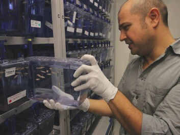 Emre Yaksi and his research group have roughly 90 different types of genetically modified zebrafish they can use in their research. (Photo: Nancy Bazilchuk, NTNU)