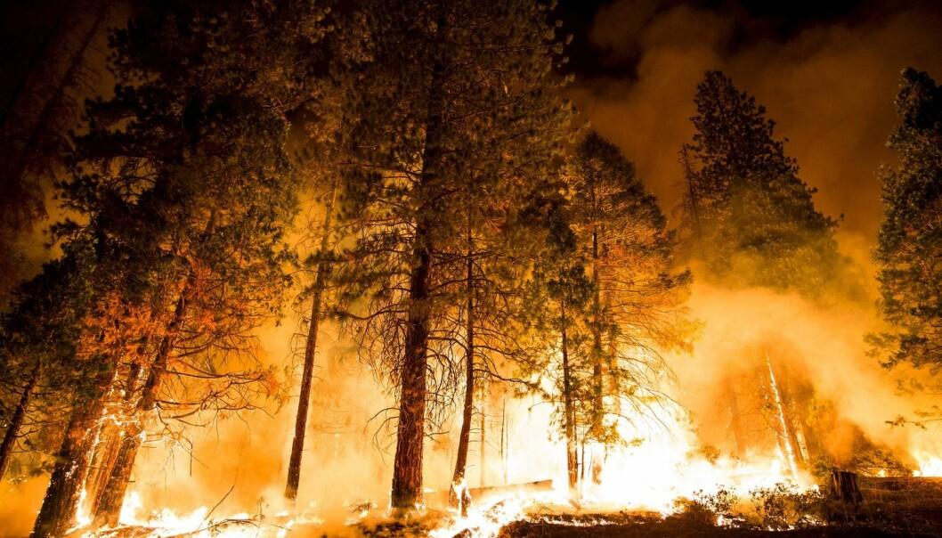 Skogbranner i California er en av værhendelsene forskerne knytter til global oppvarming. (Foto: Max Whittaker, Reuters)