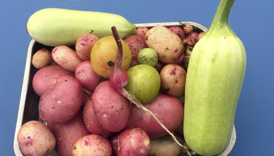 Torsdag presenterte Helsedirektoratet sin årlige statusrapport for nordmenns matvaner i året som gikk. Ifølge rapporten kjøpte vi i fjor 6 prosent mer grønnsaker enn året før.  (Foto: Terje Pedersen, NTB scanpix)
