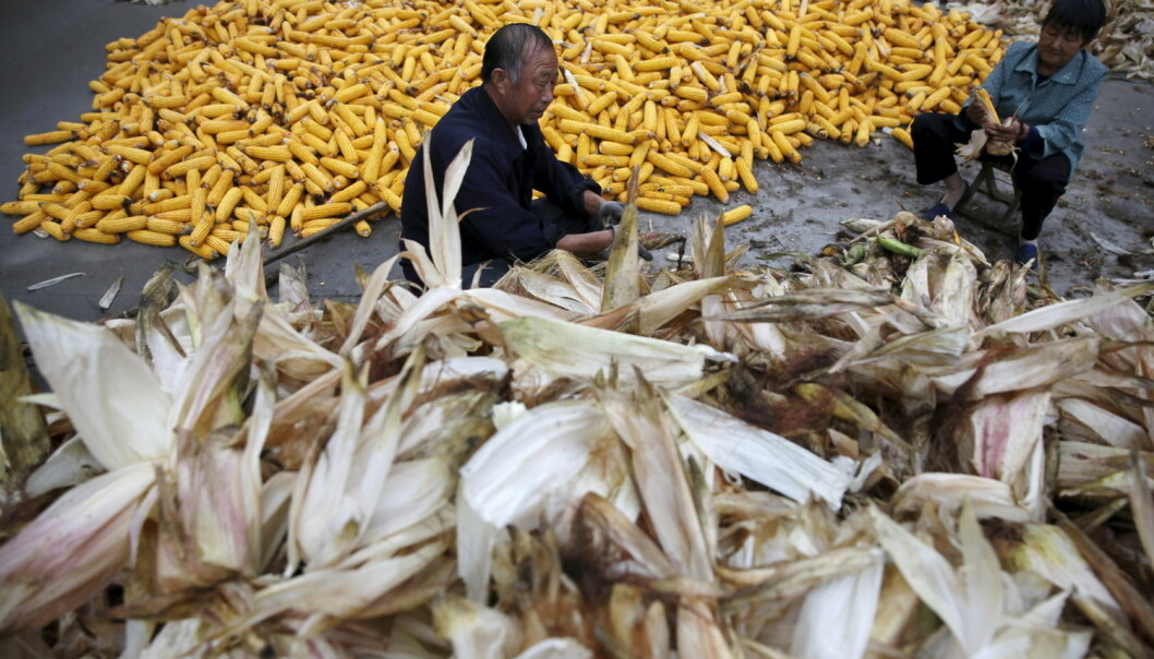 – Kina har endret landbrukspolitikken betydelig. De har satset på småbønder gjennom å privatisere jorda. Støtte til teknologi som fører til mer avling gjennom bruk av kunstgjødsel og forbedrede frøsorter har også vært en medvirkende årsak, sier professor i matsikkerhet Ruth Haug. (Foto: Kim Kyung-Hoon, Reuters/NTB scanpix)