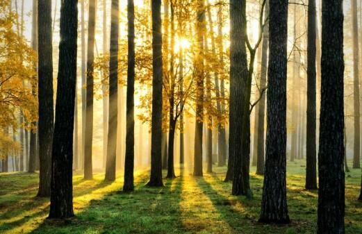 Towards a bioeconomic future