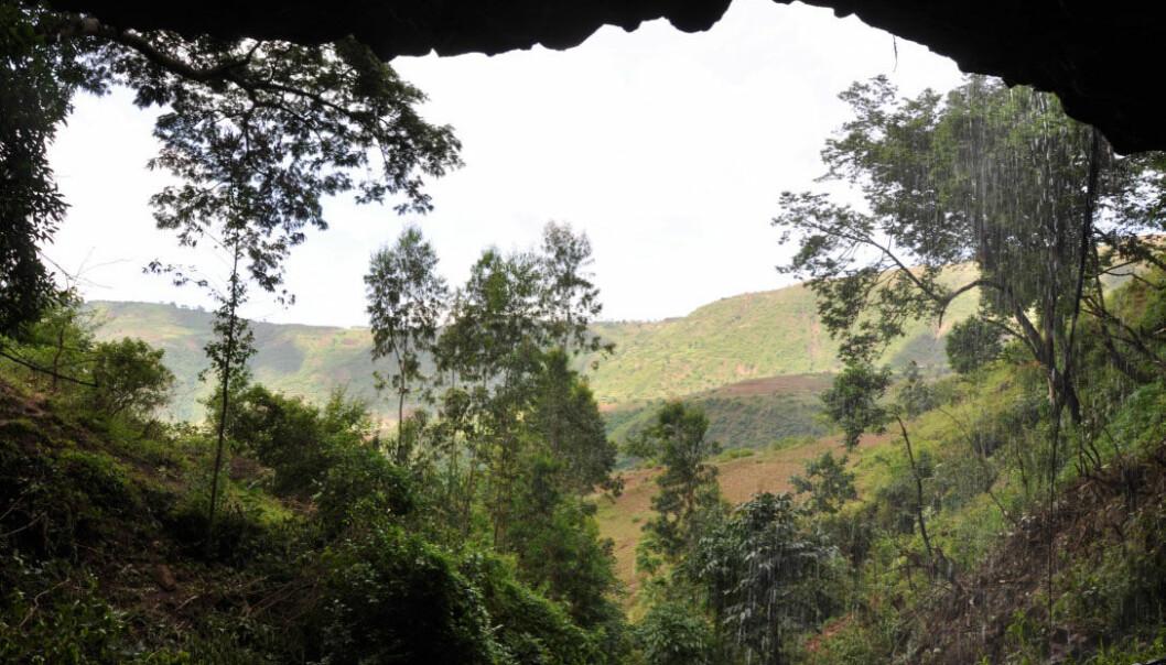 Den 4500 år gamle mannen Mota har fått navnet etter hulen der han ble funnet i 2012, Mota-hulen i høylandet sørvest i Etiopia. (Foto: Kathryn og John Arthur)