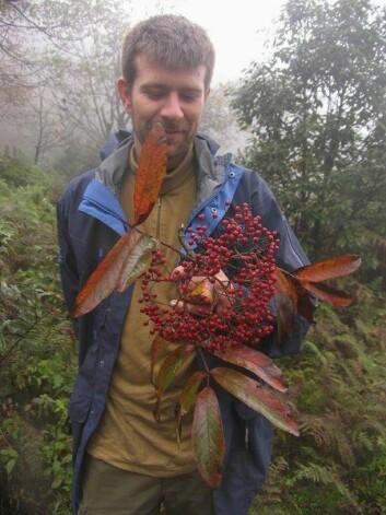 Remi Nielsen studerer Sorbus wilsoniana nordøst i Yunnan i 2009.  (Foto: Jens Nielsen)