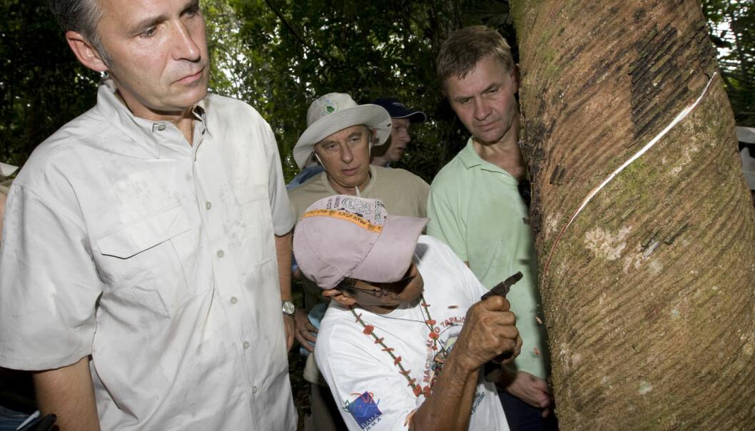 Statsminister Jens Stoltenberg, miljø- og utviklingsminister Erik Solheim og Brasils miljøminister Carlos Minc (i midten bak) får demonstrert av kjentmannen Tasso hvordan man tapper gummi i regnskogen i Amazonas i 2008. (Foto: Bjørn Sigurdsøn, NTB Scanpix)