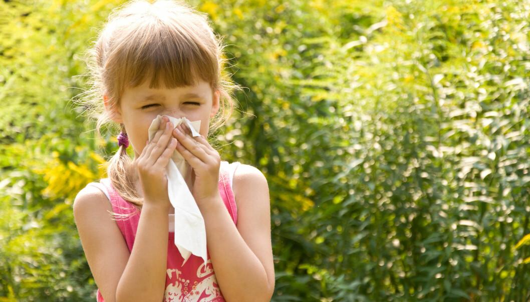 Allergi oppstår fordi immunforsvaret overreagerer på pollen.  (Illustrasjonsfoto: Microstock)