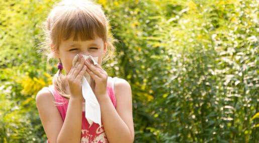 Ingen forbindelse mellom allergi og dødelige sykdommer