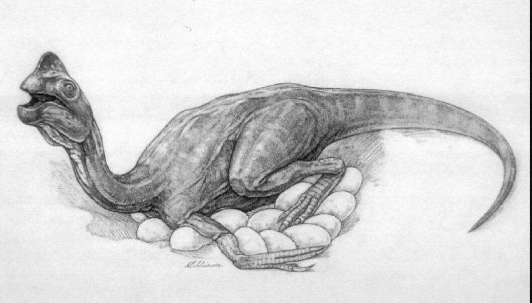 Oviraptorene i krittidens Gobiørken kunne heve temperaturen rundt seks grader over bakken omkring, viser analyser av eggeskall. Dette tyder på at i alle fall noen dinosaurer verken var vekselvarme eller likevarme, men noe midt imellom. (Illustrasjon: Reuters)