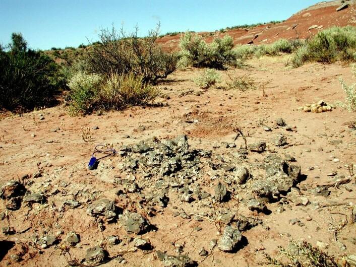 Biter av egg etter Titanosaurus ligger strødd ut over leirstein i Auca Mahuevo i Argentina. Eggeskallene viser at denne 90 tonns langhalsede kjempen kunne ha en kroppstemperatur rundt 37,6 grader Celsius. (Foto: Gerald Grellet-Tinner, medforfatter av studien i tidsskriftet Nature Communications).