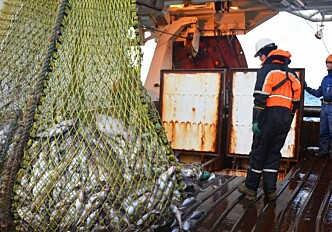 Better fish welfare means better quality