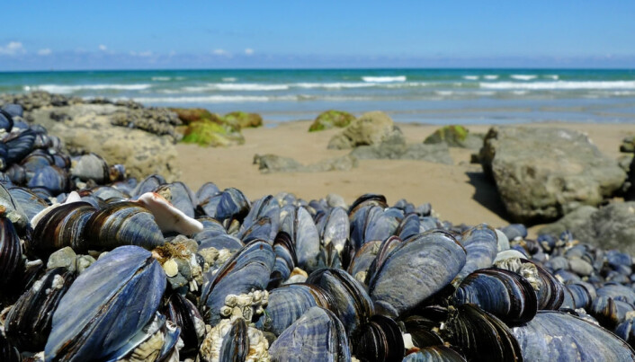 Ocean acidification might not spell doom for shellfish