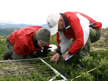 Anne Olga Syverhuset, a former master's student at the Norwegian University of Science and Technology, and researcher Jarle Inge Holten examine plants growing in a plot in the Dovre Mountains in Norway in the summer of 2008. Results from the project, combined with data from 16 other major mountain locations across Europe, showed that alpine cold-adapted species in Europe are declining as warmer temperatures favour the increase of warm-adapted species. (Photo: Ottar Michelsen)