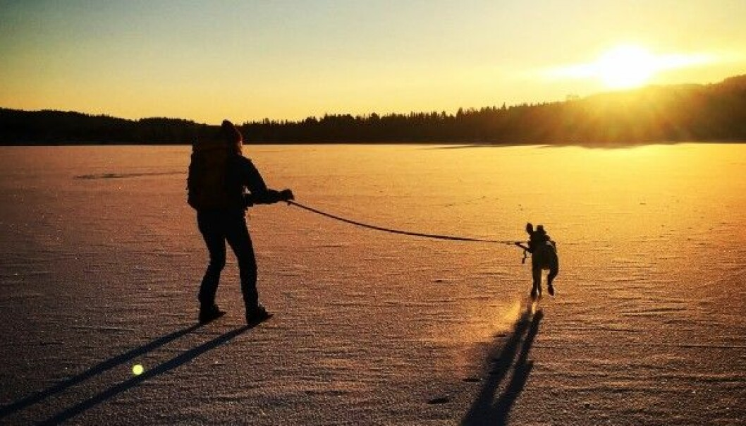 Skating on frozen lakes can be a beautiful way of experiencing nature. But if an accident happens you ought to know what to do. (Photo: Øystein WIggen.)
